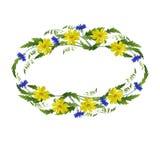Feld von gelben Blumen von Kornblumen und von Blättern Lizenzfreies Stockfoto
