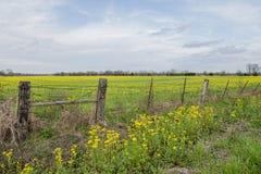 Feld von gelben Wildflowers in Louisiana Stockbilder