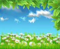 Feld von Gänseblümchen Stockfotos