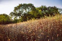 Feld von hohen Blumen lizenzfreies stockfoto