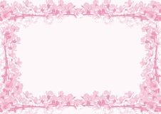 Feld von Kirschblüten Stockfotos