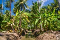 Feld von Kokosnuss- und Bananenbäumen in Ampawa Stockfotos