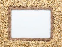 Feld von Leinwand und von Gerste in den Bohnen Stockfotos