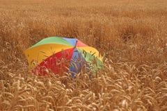 Feld von Mais Lizenzfreies Stockbild