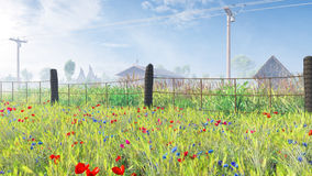 Feld von Mais Poppy In The Mist Stockfotos