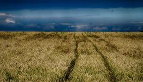 Feld von Mais und von Himmel 2 Stockfotografie