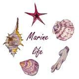 Feld von Meer schält Aquarellillustration Stockfoto