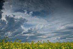 Feld von Rapssamen mit einem großen stürmischen Himmel Stockbilder