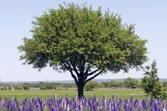 Feld von Rocket Larkspur vor Baum Lizenzfreie Stockbilder