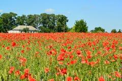 Feld von roten Mohnblumen an einem sonnigen Tag Stockfotos