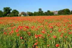 Feld von roten Mohnblumen an einem sonnigen Tag Lizenzfreie Stockfotografie