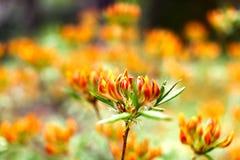 Feld von schönen bunten Blumen (flacher DOF) Stockbild