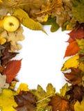Feld von schöner Herbst gefallenen Blättern In der Ecke des Apfels Lizenzfreies Stockbild
