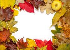 Feld von schöner Herbst gefallenen Blättern In der Ecke des Apfels Lizenzfreie Stockbilder