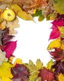 Feld von schöner Herbst gefallenen Blättern In der Ecke des Apfels Stockbilder