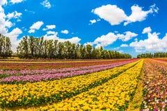Feld von schönen Blumen Stockfoto