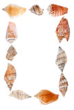 Feld von Seashells Stockfotografie