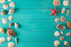 Feld von seashellson auf hölzernem Hintergrund Raum für Text Lizenzfreies Stockfoto