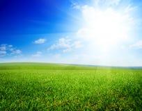 Feld von Sommergrün geass stockfotografie