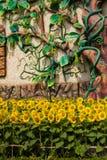 Feld von Sonnenblumen stockfotos