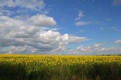 Feld von Sonnenblumen auf einem Hintergrund des bewölkten Himmels Lizenzfreies Stockbild