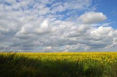Feld von Sonnenblumen auf einem Hintergrund des bewölkten Himmels Stockbild