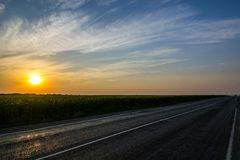 Feld von Sonnenblumen, in den Strahlen eines ausgezeichneten Sonnenuntergangs stockfotografie