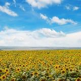 Feld von Sonnenblumen und von Himmel Lizenzfreie Stockbilder