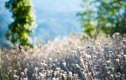 Feld von weißen Blumen stockfoto