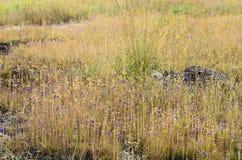 Feld von wilden Blumen Stockbild