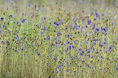Feld von wilden Blumen Stockfoto