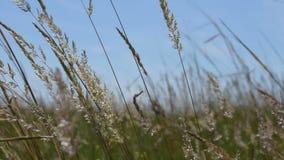 Feld von wilden Blumen, von Anlagen und von Kräutern stock footage