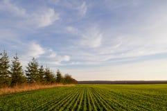 Feld von Winterweizensämlingen im Frühjahr an einem sonnigen Tag und stockbild