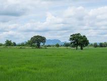 Feldbäume und blauer Himmel Stockbild