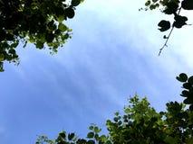 Feldbaumhimmelblaulicht stockfotos