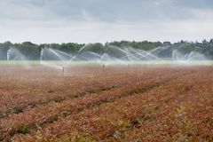 FeldBewässerungssystem mit Berieselungsanlagen in der Arbeit lizenzfreies stockbild