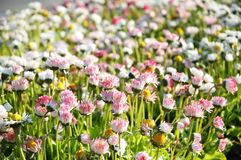 Feldblumen Stockfotografie