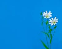 Feldblumen Stockbilder
