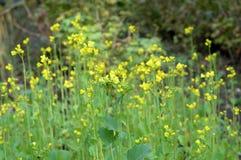 Feldblumen auf einer Wiese lizenzfreies stockbild