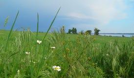Feldblumen und -gras Stockfotografie