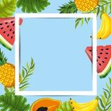 Felddesign mit Hintergrund der tropischen Frucht Stockfotografie