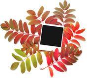 Felder über Herbstblättern Lizenzfreie Stockfotografie