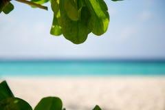 Felder angesichts des Strandes Lizenzfreies Stockbild