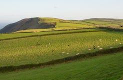 Felder auf Exmoor nahe Lynton, Devon, England Lizenzfreies Stockbild