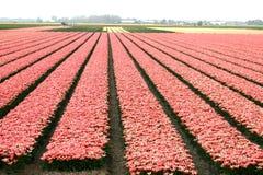 Felder der Blumen Stockbild