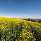Felder der Luzerne in den Alpen Lizenzfreie Stockbilder