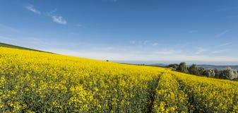 Felder der Luzerne in den Alpen Stockfotografie