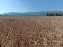 Felder in der Trockenzeit lizenzfreies stockbild