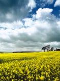 Felder des Gelbs Lizenzfreies Stockfoto