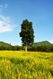 Felder des Gelbs und des Baums Lizenzfreies Stockbild